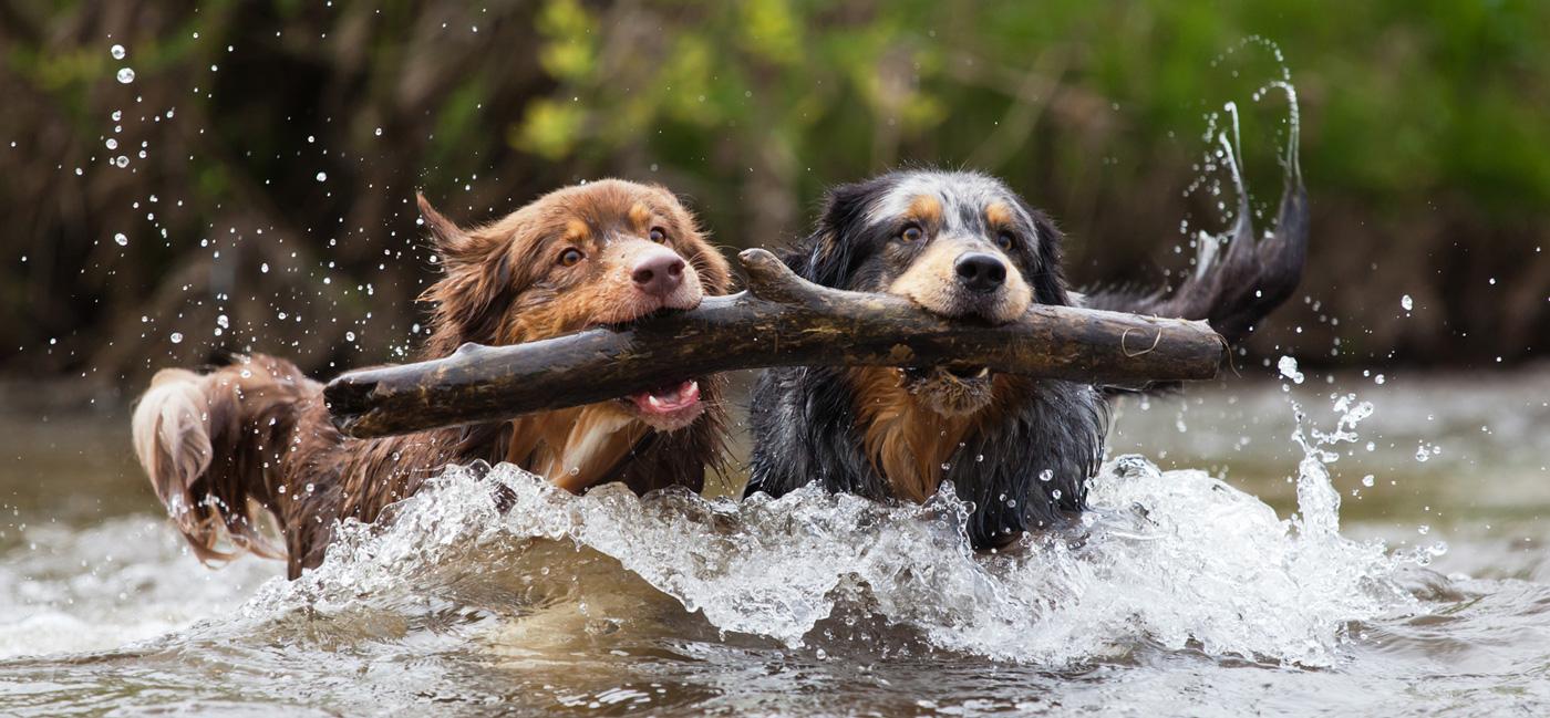 Tierarzt Hund Hunde