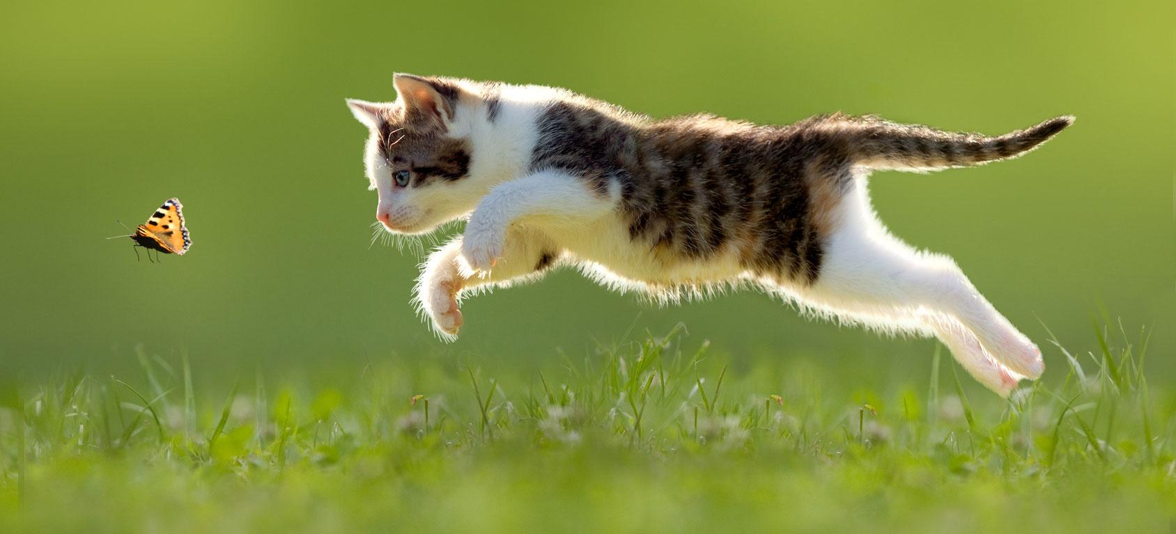 Tierarzt Katze Katzen
